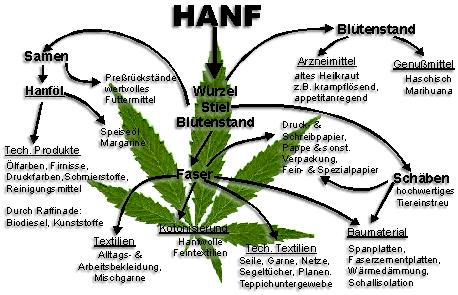 Schaubild über die Nutzbarkeit von Hanf - Hanf Museum Berlin