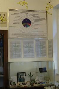 Foto der Hanf als Medizin Ausstellung im Hanf Museum